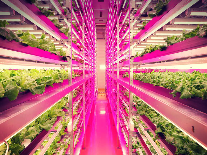 World's largest vertical farm to be displayed in Expo 2020